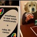 Tu perro en tang4