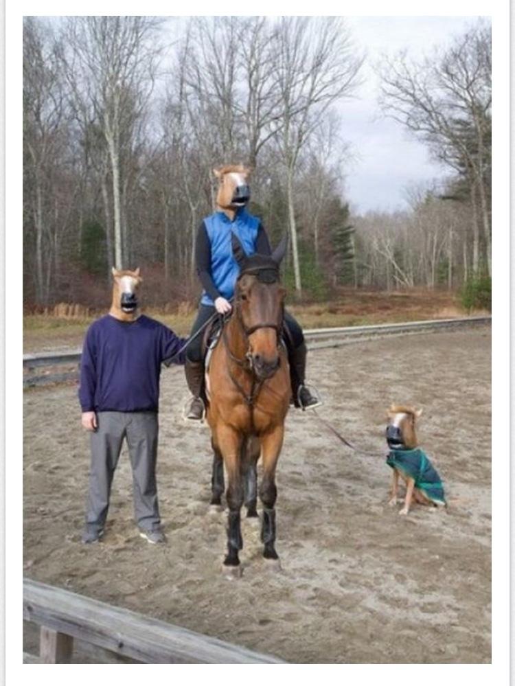 un caballo sobre un caballo al lado de un caballo y otro caballo con correa - meme