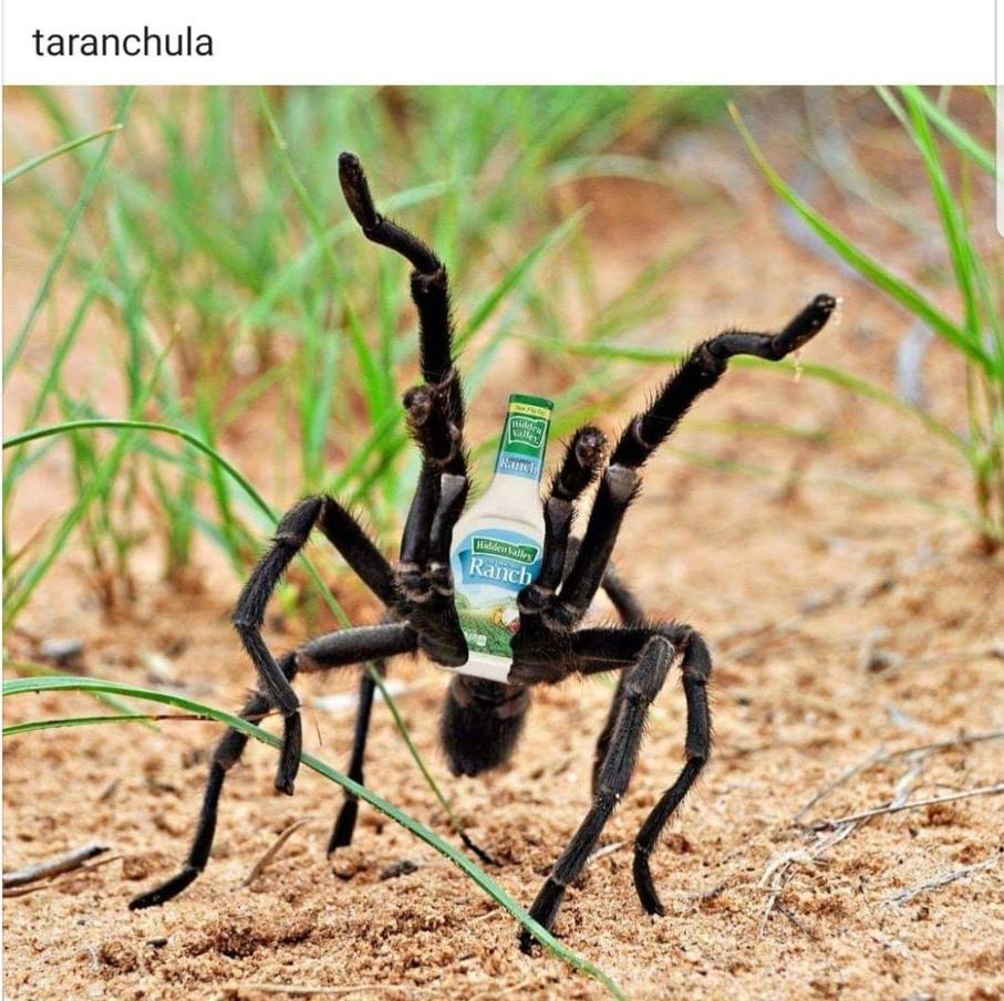taRANCHula - meme