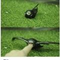 bird go monch