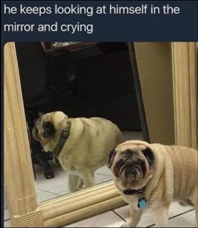 Me too, boy, me too - meme