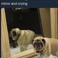 Me too, boy, me too