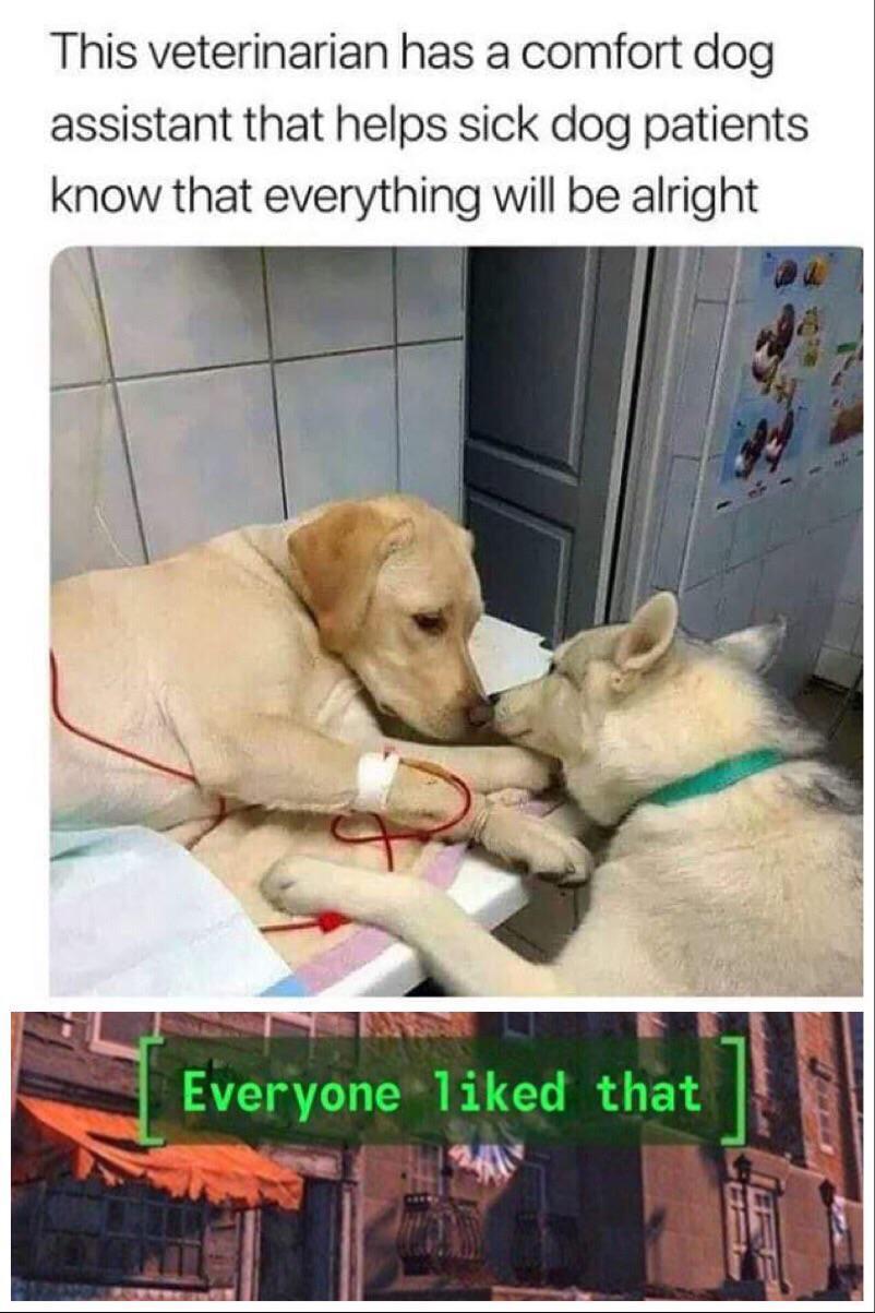 wholesome doggo - meme