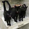 Three blacks
