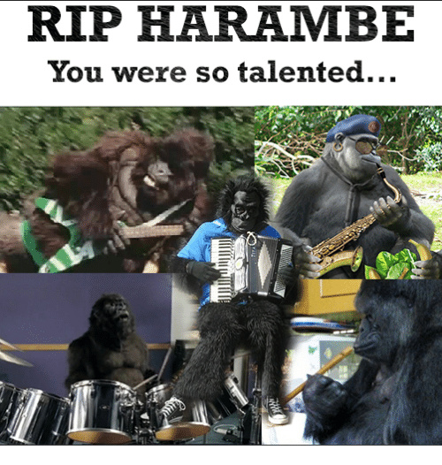 dicks ud for harambe