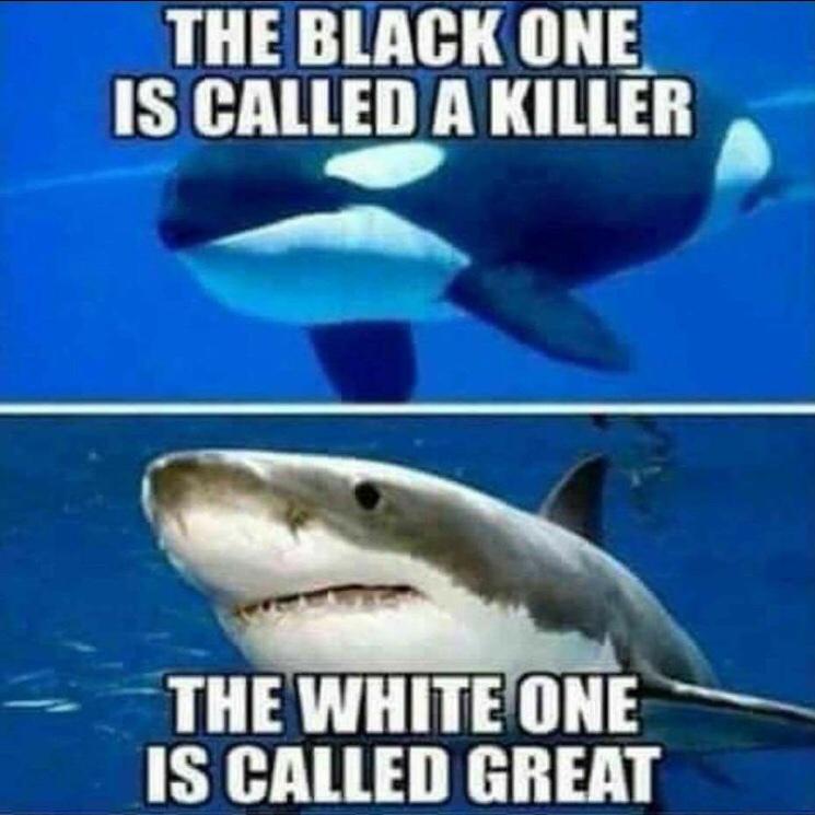 Everyone's A Racist - meme