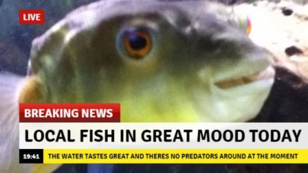 Enjoy this happy fish :) - meme