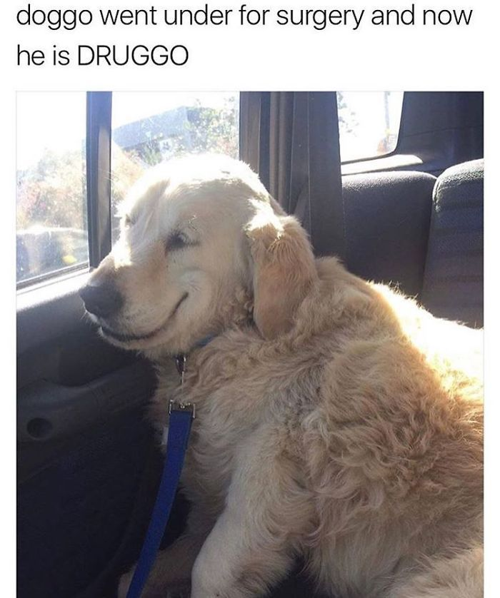 doggo went under for surgery and now he is DRUGGO - meme