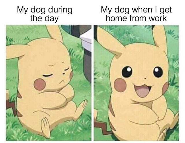 My dog during the day - meme