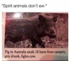 My spirit animal - meme
