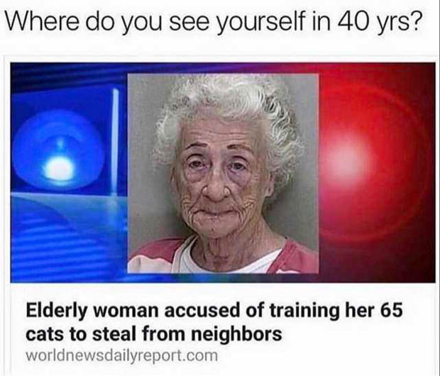 -Elderly Women accused of training her 65 cats to steal!- - meme