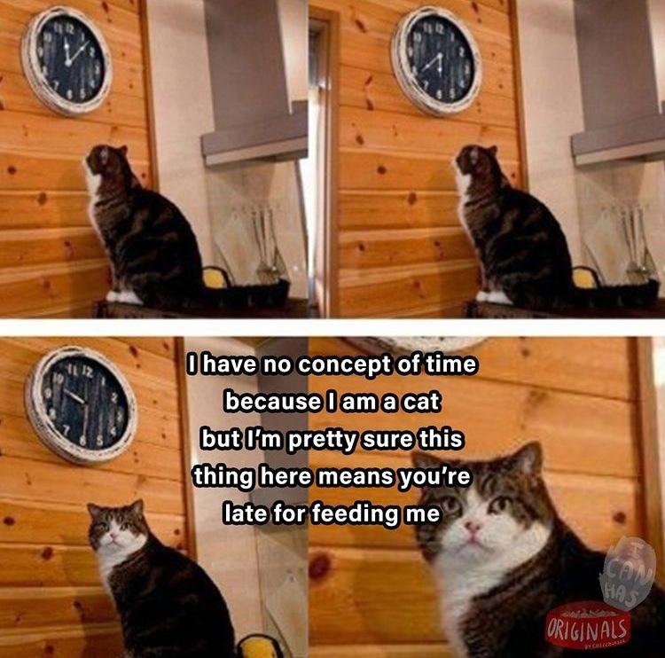 feed meh - meme