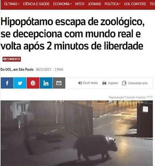 O que o hipopótamo viu? - meme