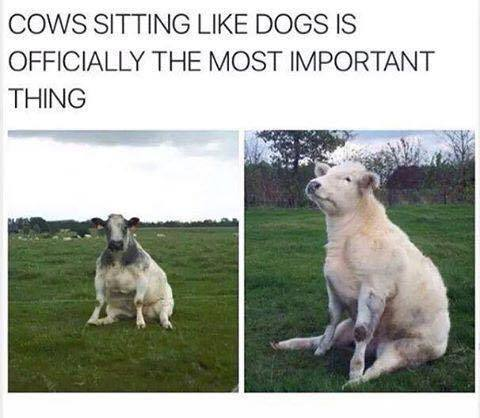 Sitting like humans - meme