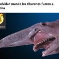 Tiburones Argentinos XD