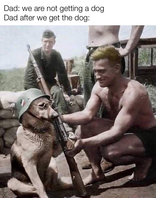 Doggo does a shoot - meme