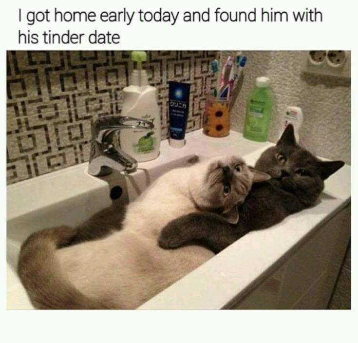 Cat has a date - meme
