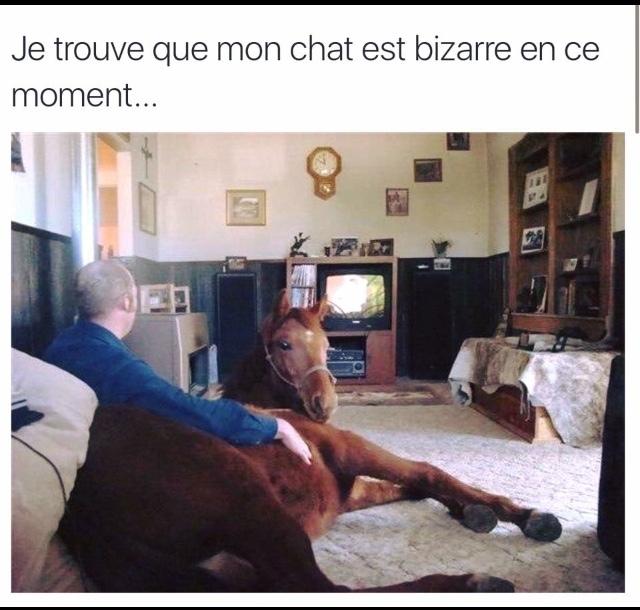 chat? - meme