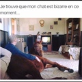 chat?
