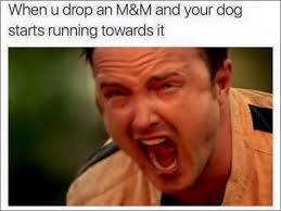 Holy shit kills the damn dog - meme