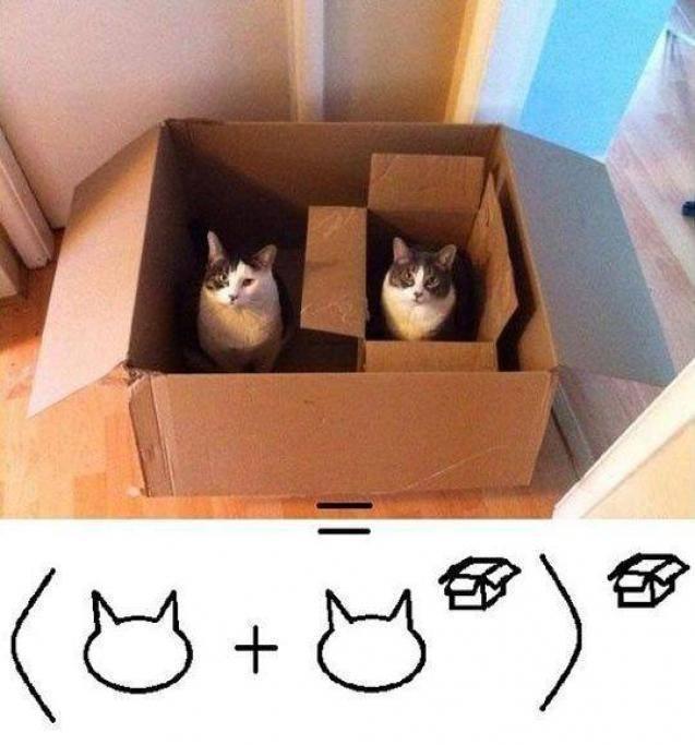La 100cia en gatos - meme