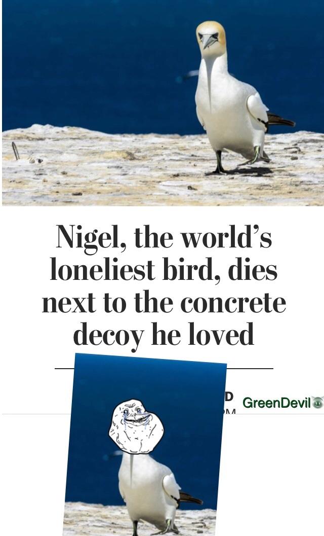 poor bird - meme