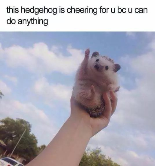 Helpful hedgehog - meme