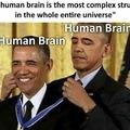Le brain