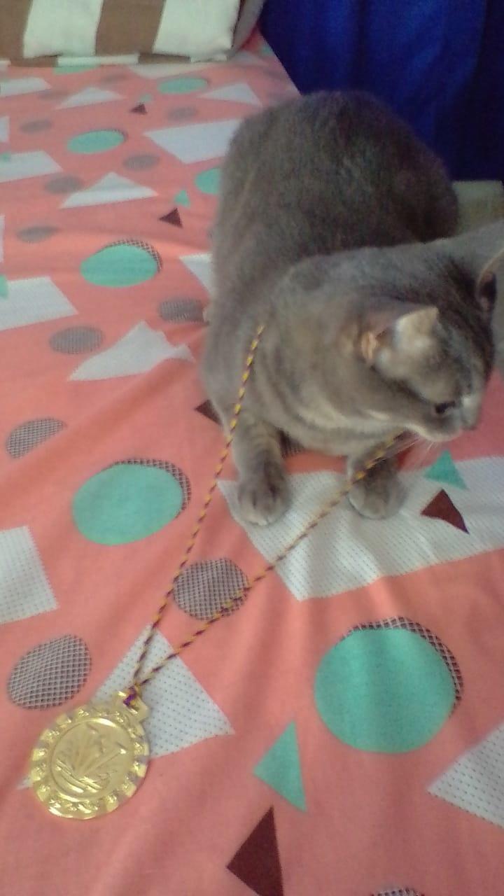 ño c poh k suhboh ehstoh ahcah es la foto de mi gatita con medalla - meme