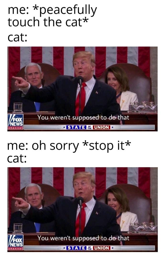 Insert cat - meme