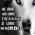 Lobinho :(