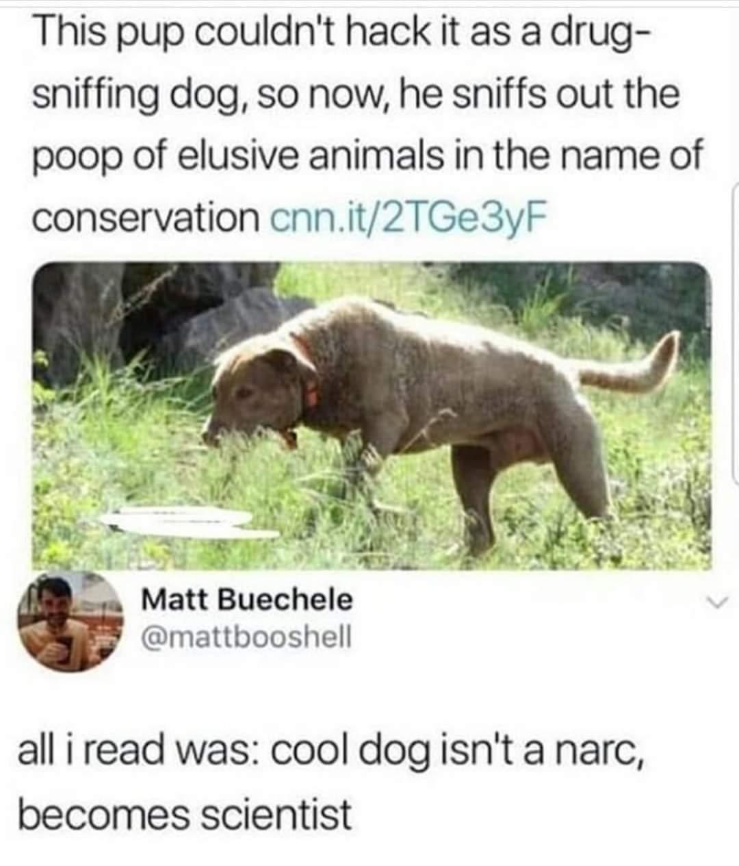 Giod doggo - meme
