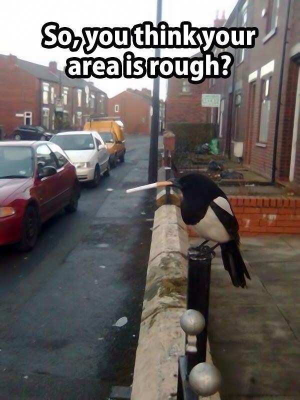 you may be hardcore. but you won't be a bird with a cig hardcore. - meme