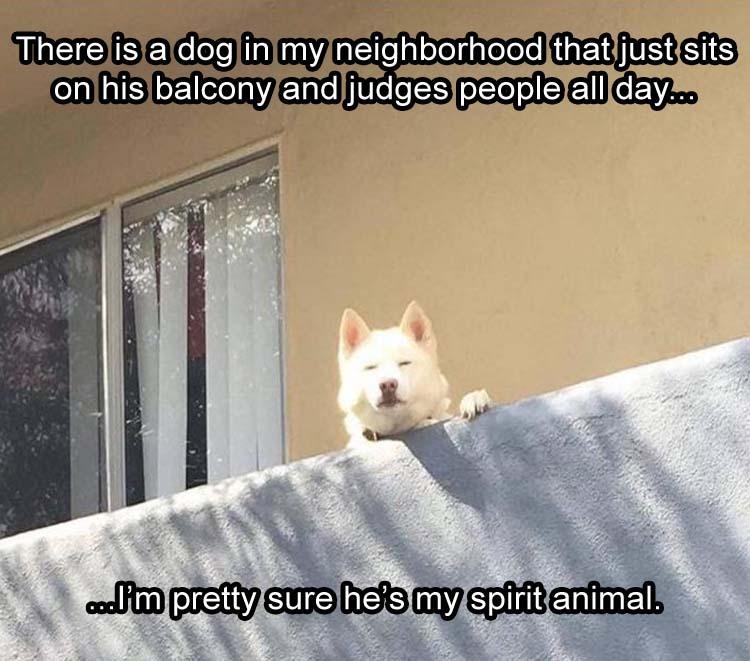 Spirit doggo - meme