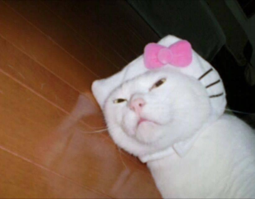 Après Dora c'est à Hello Kitty d'avoir son film en Live. - meme
