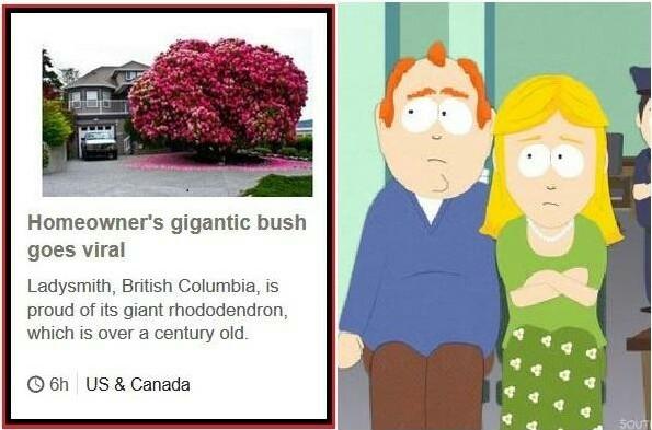 The magic bush - meme