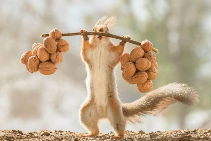 """It's not """"balls to the walls"""" it's """"walnuts to the squirrel's butt"""" - meme"""