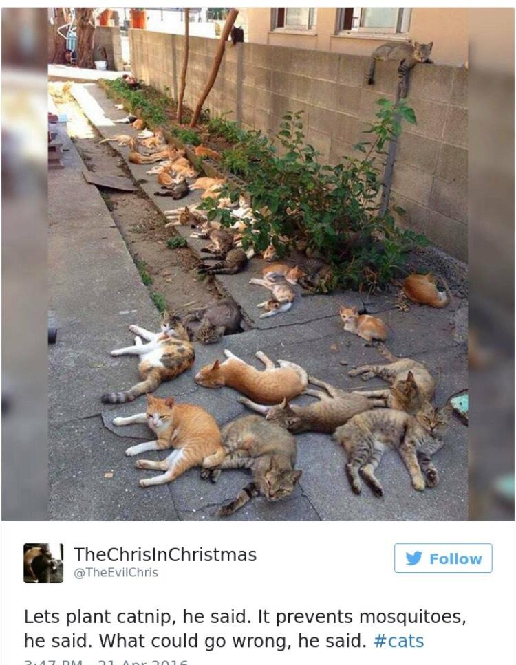 Cats.... - meme