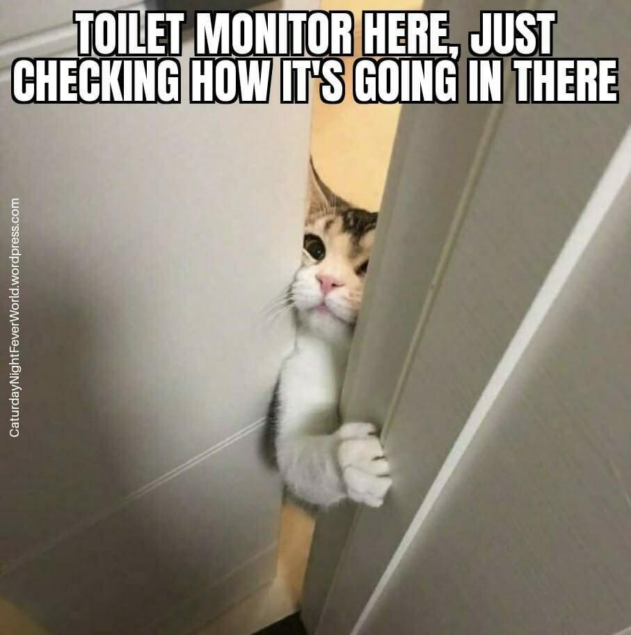 supervisor cat - meme