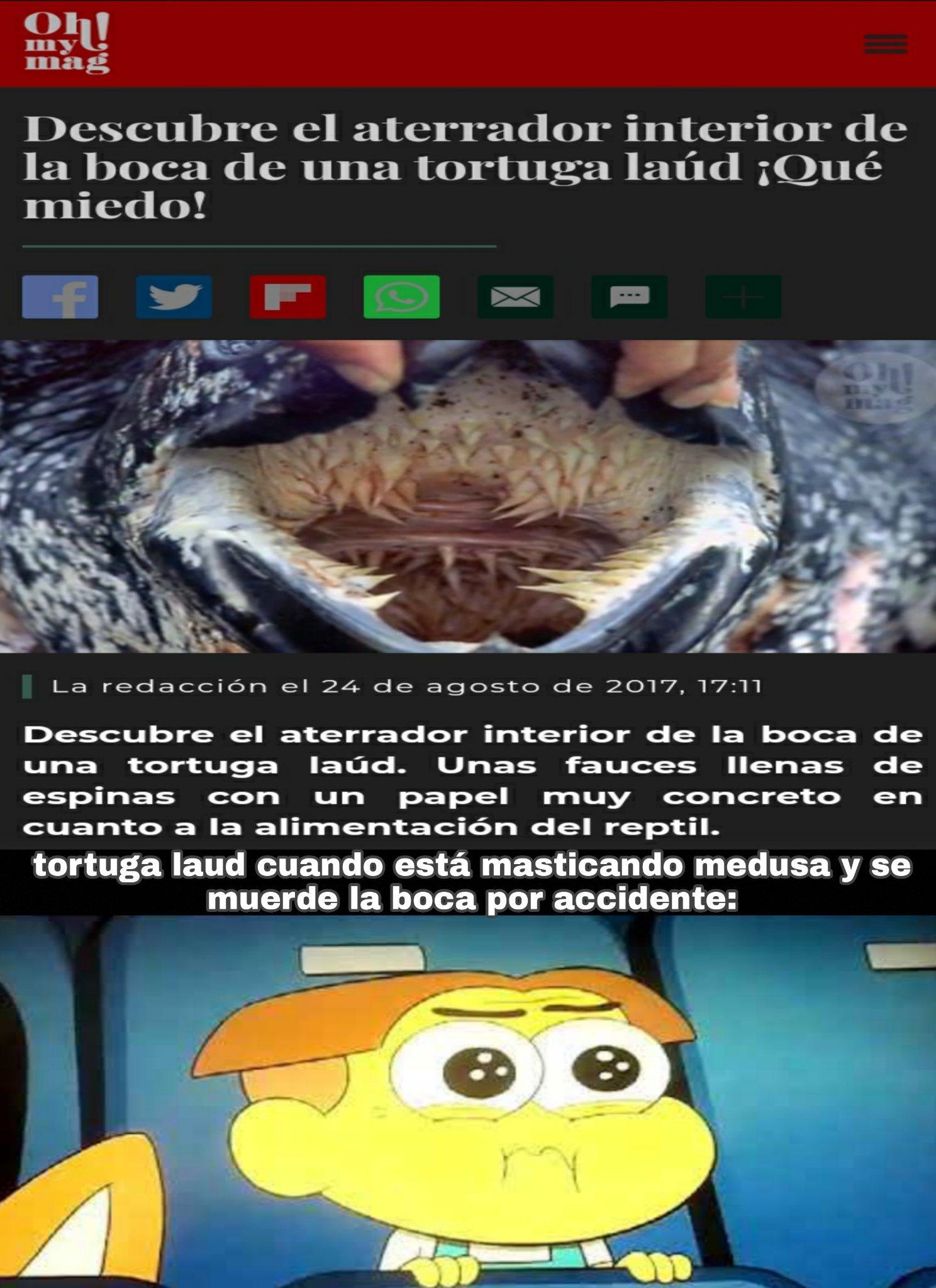Y si, las tortugas marinas comen medusas, de ahí que se ahoguen con bolsas de plástico, por confundirse (postdata: la foto de Grillo la saqué de Google) - meme