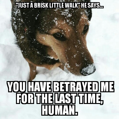 It's too cold for your shit, you 2 legged bastard - meme