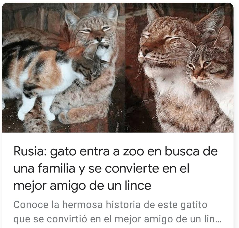Hasta los gatos rusos son unos bestias - meme