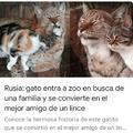 Hasta los gatos rusos son unos bestias