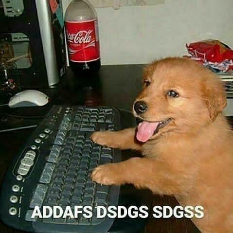 Perro gamer - meme