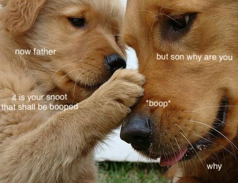 Pupper memes r life