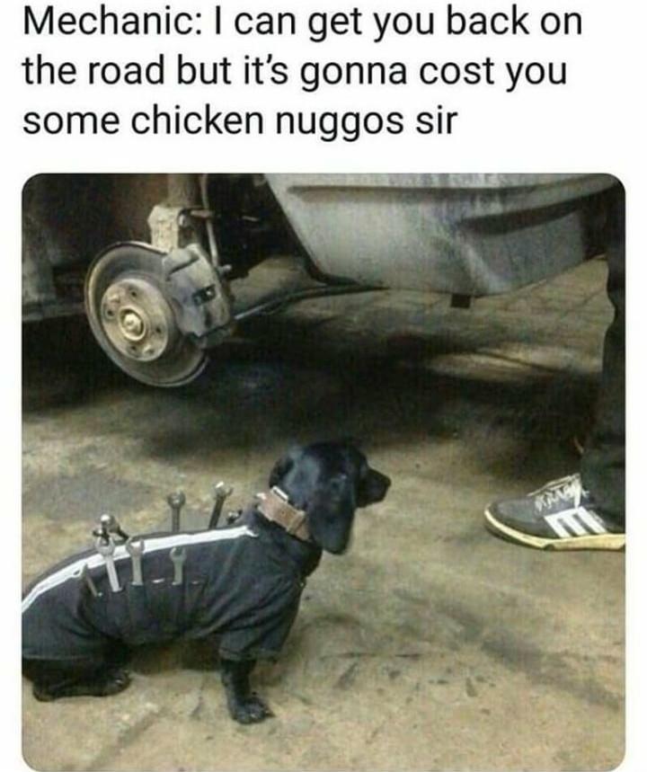 Dachshund Datsun mechanic - meme