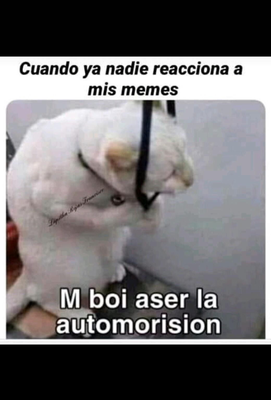 Automorision - meme
