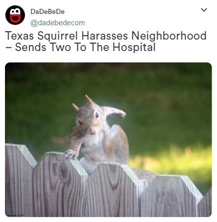 Texas Squirrel Harasses Neighborhood – Sends Two To The Hospital - meme