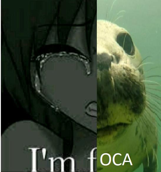 ERES UNA FOCA - meme