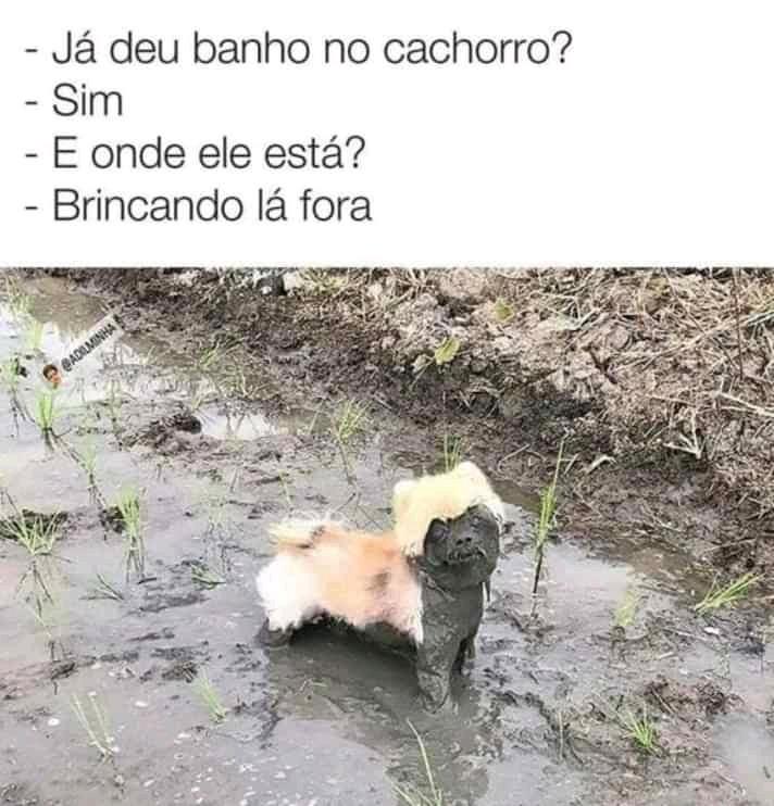 Cachorro otacu - meme